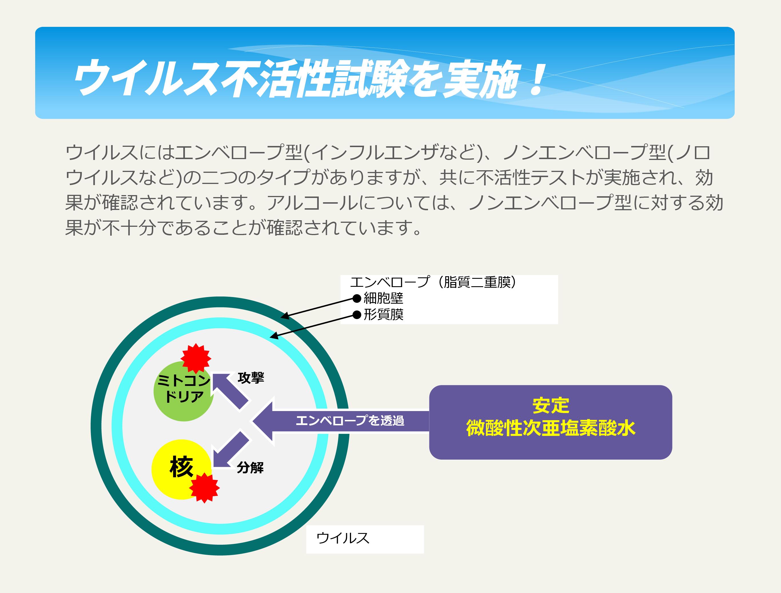 ウイルス不活性試験を実施